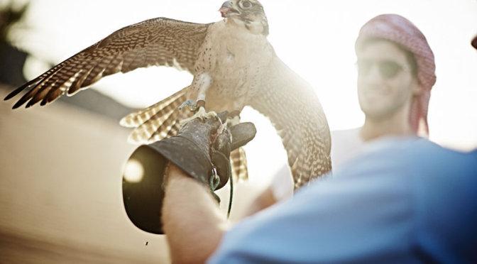 Baauer mit einem Falkner© Balazs Gardi/Red Bull Content Pool